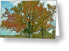 Autumn Sweetgum Tree Greeting Card