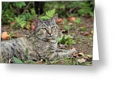 Autumn Tabby Cat #2 Greeting Card