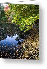 Autumn Tree Colors In Central Park In New York City Greeting Card