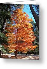 Autumn Tree Greeting Card