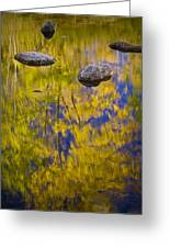 Autumn Tree Reflections With Rocks On The Muskegon River Greeting Card