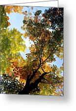 Autumn Trees Low-angle Greeting Card