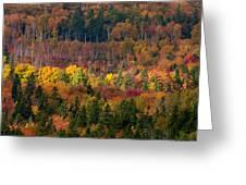 Autumn Trees Panorama Greeting Card by Matt Dobson