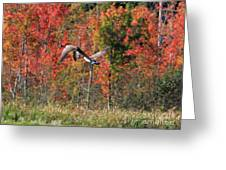 Autumn Vermont Geese And Color Greeting Card