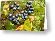 Autumn Viburnum Berries Series #3 Greeting Card