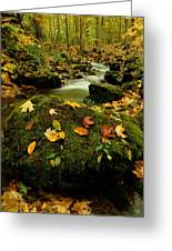 Autumn View Shows Fallen Leaves Greeting Card