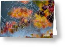 Autumn Web Greeting Card