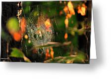 Autumn Web Greeting Card