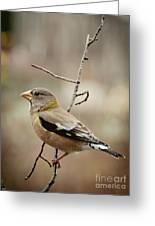Autumn Wildlife Greeting Card