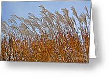 Autumn Wind Through The Grass Greeting Card