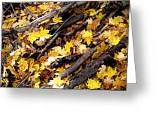 Autumnal Melody Greeting Card