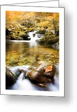 Autumnal Stream Greeting Card by Mal Bray