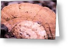 Autumn's Abstract Mushroom Greeting Card