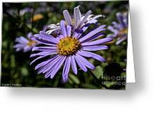 Autumn's Aster Greeting Card