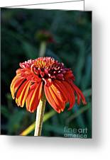 Autumn's Cone Flower Greeting Card