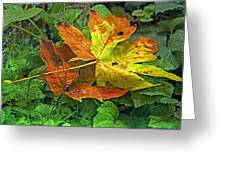 Autumn's Gift Greeting Card