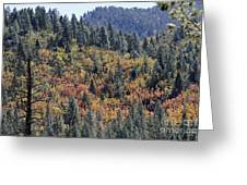 Autumns Palette Greeting Card