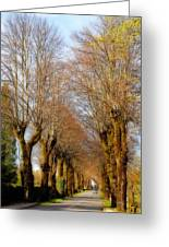 Avenue Of Trees Greeting Card