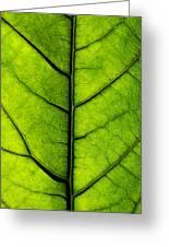 Avocado Leaf 2 Greeting Card
