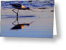 Avocet In The Dim Light Greeting Card by Catherine Natalia  Roche
