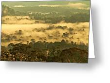 Awakening Forest Greeting Card