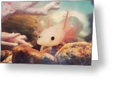 Axolotl Stare Greeting Card