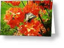 Azalea And Butterfly 1 Greeting Card