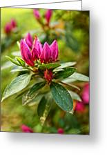 Azalea Blast Vertical Greeting Card