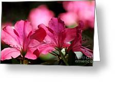 Azalea Blossoms Greeting Card