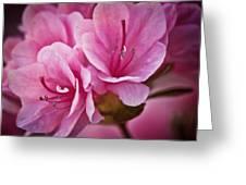 Azalea Fission One Greeting Card by Michael Putnam