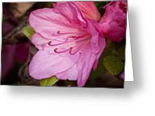 Azalea Up Close And Personal Greeting Card by Michael Putnam