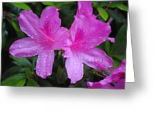 Azalea's In Spring Rain #1 Greeting Card