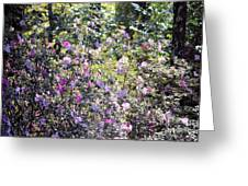 Azaleas In The Forest Greeting Card