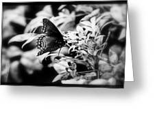B N W Butterfly Greeting Card