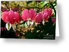 B2n Bleeding Heart 3 Greeting Card