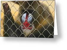 Baboon Behind Bars Greeting Card