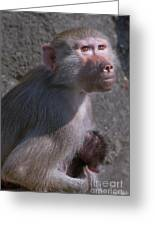 Baboon Carrying Her Baby Greeting Card