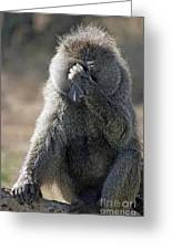 Baboon With Headache Greeting Card