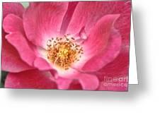 Babs Pink Greeting Card