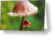 Baby And Parent Mushroom Greeting Card