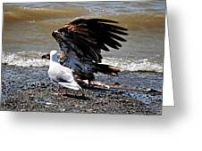 Baby Bald Eagle Movement Greeting Card