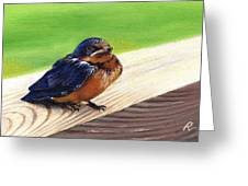 Baby Barn Swallow Greeting Card by Peggy Dreher