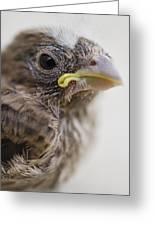 Baby Bird 3 Greeting Card by Jessica Velasco