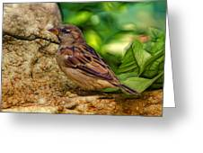 Baby Birdie Greeting Card