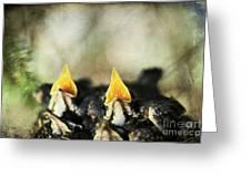 Baby Birds Greeting Card by Darren Fisher