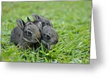 Baby Bunnies Greeting Card