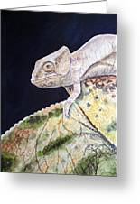 Baby Chameleon Greeting Card