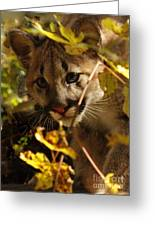 Baby Cougar Playing Peek A Boo In Autumn Forest Greeting Card