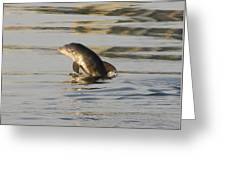 Baby Dolphin Greeting Card