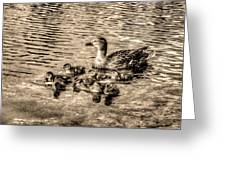 Baby Ducks - Sepia Greeting Card